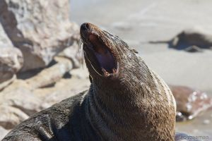 Cape cross - Cape fur seal colony-2